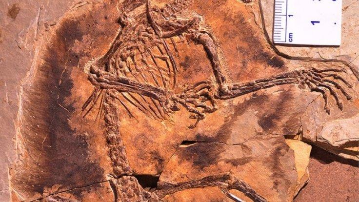 Strange 160-million-year-old fossils reveal that the earliest mammals could glide