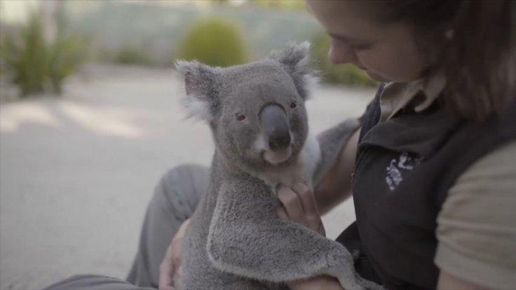 These koalas love getting massages