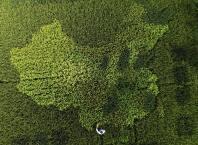 Paddy field China