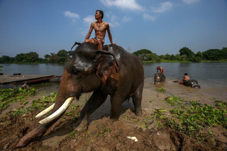 Elephant kills UK tourist,