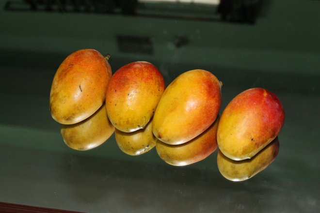 anti-cancer mango