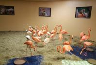 Flamingos evacuate to safety in Tampa