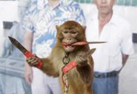 Year of the monkey in chinese lunar calendar