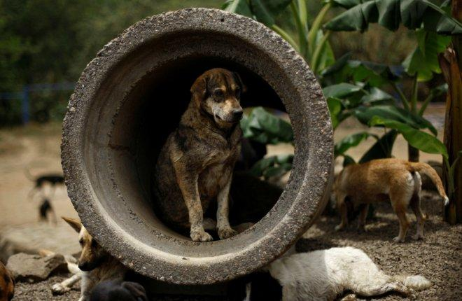 A stray dog is seen at Territorio de Zaguates or 'Land of the Strays' dog sanctuary in Carrizal de Alajuela, Costa Rica, April 20, 2016. In a lush, sprawling corner of Costa Rica, hundreds of dogs roam freely on a hillside - among the luckiest strays on e