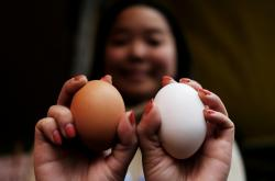 Hen's eggs to fight cancer