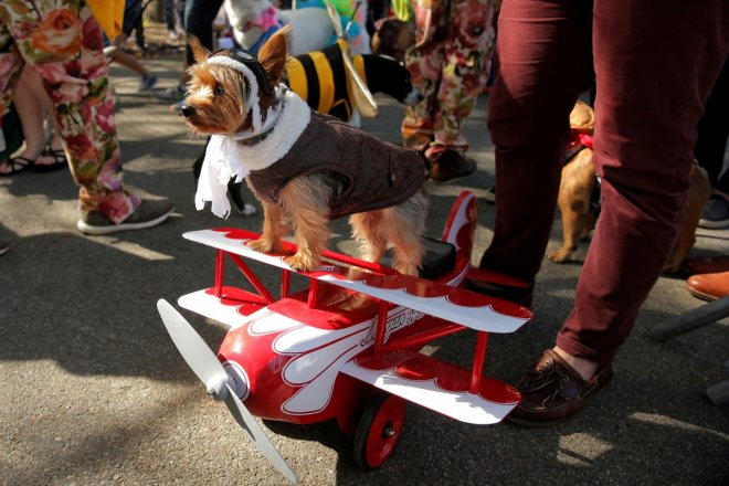 27th annual Halloween dog parade