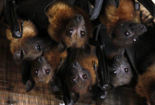 Bat colony