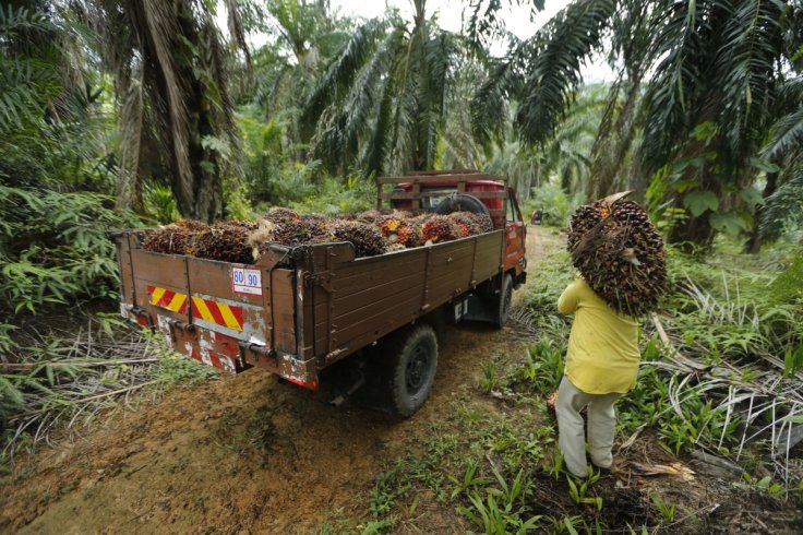 Malaysia upset of Singapore University's research linking palm oil to heart disease