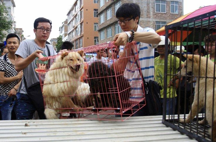 China dog-meat festival: Protesters deliver big petition to stop the festival