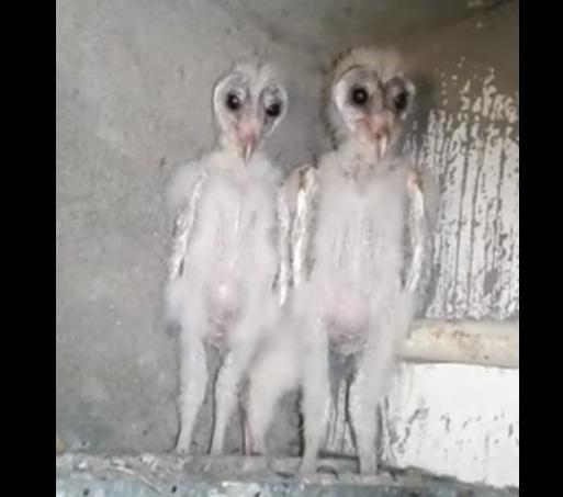 alien india