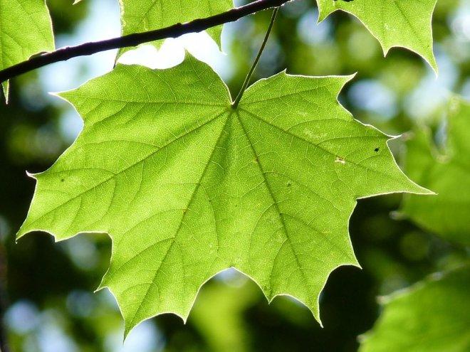 Light green leaves