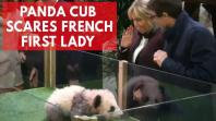 Frances first baby panda growls as godmother Brigitte Macron names her