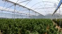 $45 million worth of cannabis uncovered in Australia