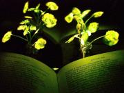 Glowing plants