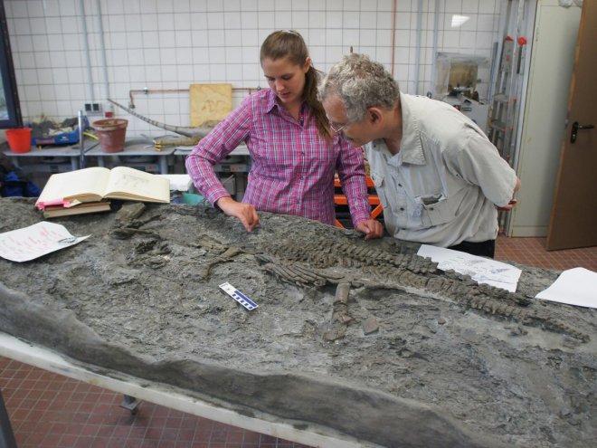 plesiosaur's skeleton