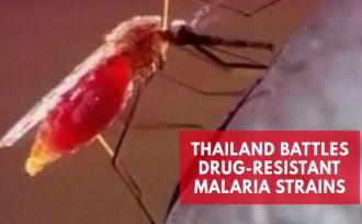 Thailand battles drug-resistant malaria strains