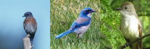 Noise pollution affects birds
