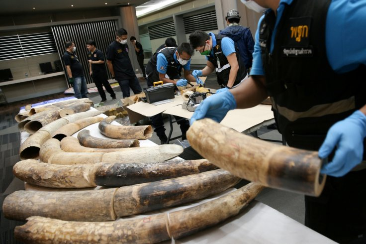 Thai forensic experts work near confiscated elephant tusks after a news conference at the Customs Department in Bangkok, Thailand