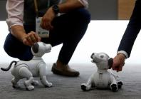 UNITED STATESSony's Aibo robotic dogs are displayed during the 2018 CES in Las Vegas