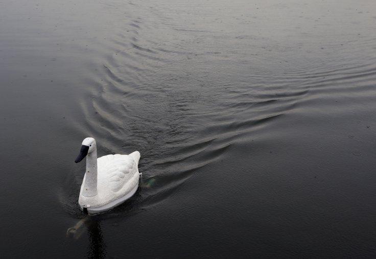 PU swan