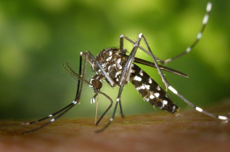 Brazil's death toll from yellow fever triples - WHO