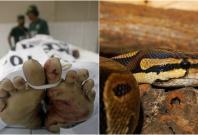 Snake killed Malaysian man