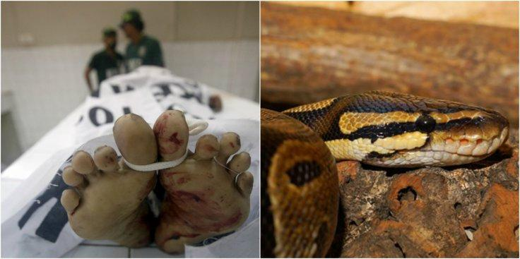 Snake killed Malaysian man