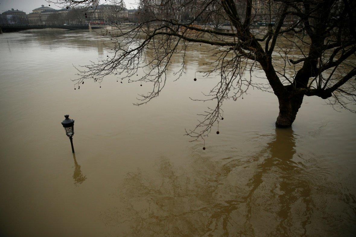 street lamp and a tree are seen on the flooded banks of the River Seine in Paris