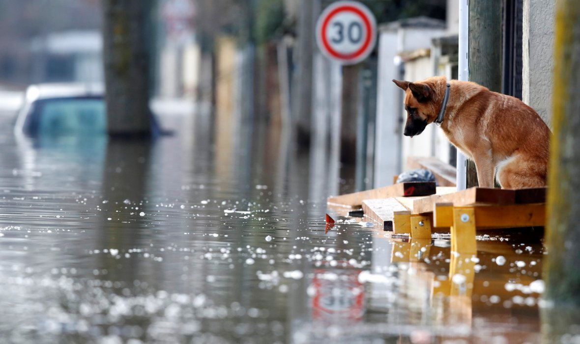 Dog is seen at the entrance of a house in the flooded residential area of Villeneuve-Saint-Georges
