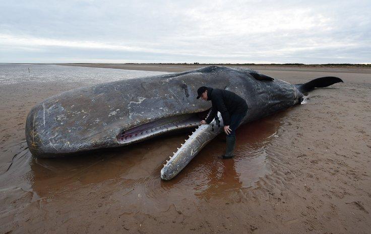 Resultado de imagem para whale plastic
