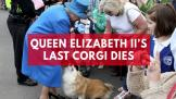 queen-elizabeth-iis-last-corgi-dies