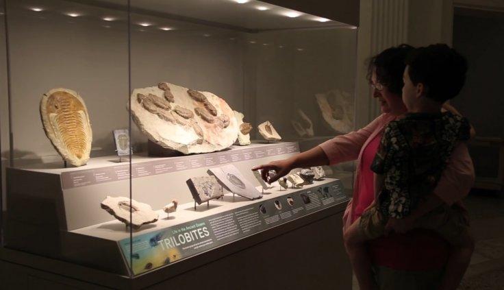 Trilobites fossil