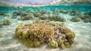 coral-reefs-cant-keep-up-with-the-rate-of-climate-change
