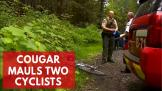emaciated-cougar-mauled-two-washington-cyclists-killing-one