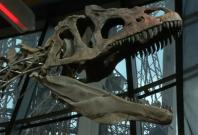 mystery-dinosaur-skeleton-sold-for-2-3-million