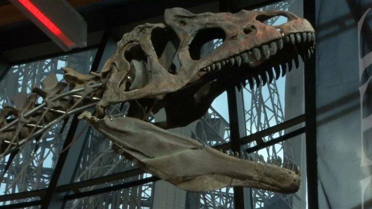 mystery-dinosaur-skeleton-sold-for-2-3-million