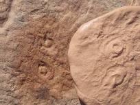 Fossil named after obama