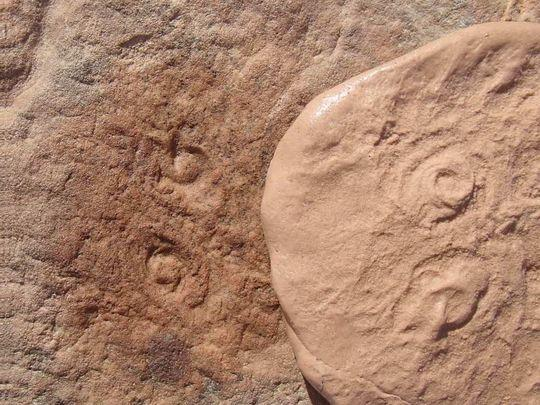 Fossil named after obama