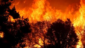 California's Pilot  fire: At least 6,298  acres of forest have been destroyed in wildfire in  the San Bernardino National Forest in Southern California.