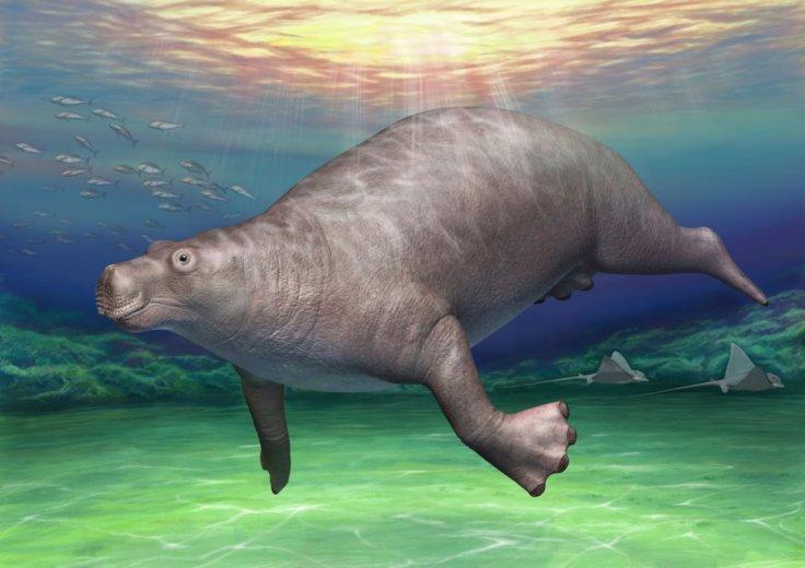 Life reconstruction of paleoparadoxia from the city of Tsuchiyu Onsen. This artistic image was based on a combination of photogrammetric 3D models of original skeletal fossils using PhotoScan v. 1.4.0 [46] including EESUT-PV-0001 (Figure 5), and
