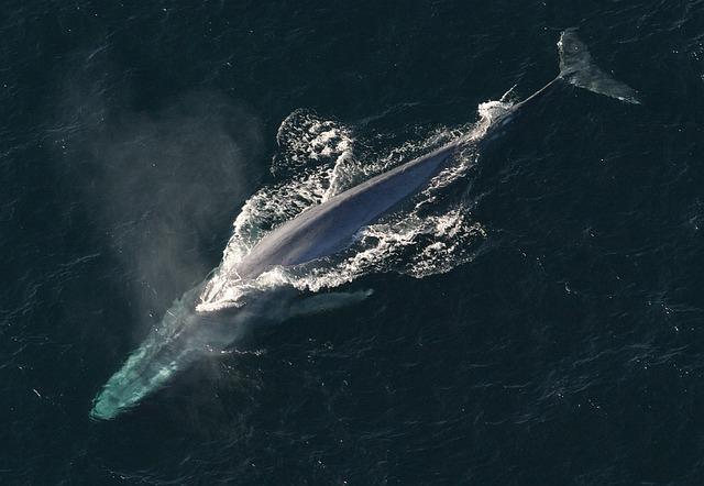 whale-dolphin hybrid