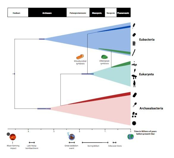 A timescale for the evolution of life on planet Earth summarising the findings of Betts et al. study.