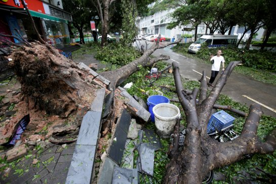 A man walks past uprooted trees on a damaged street after Typhoon Mangkhut hit Shenzhen, Guangdong province, China September 17, 2018. REUTERS/Jason Lee TPX