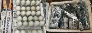 Smuggled Duck Eggs
