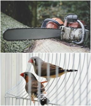 Birds and deforestation