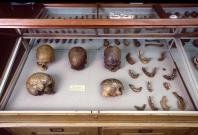 These are skulls and other human remains from P.W. Lund's Collection from Lagoa Santa, Brazil kept in the Natural History Museum of Denmark.