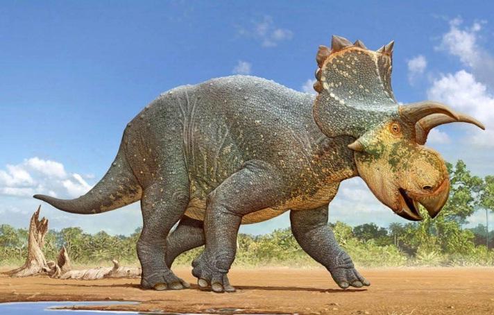 Horned dinosaur