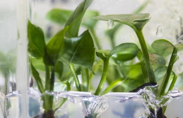 plant absorbs air pollutants