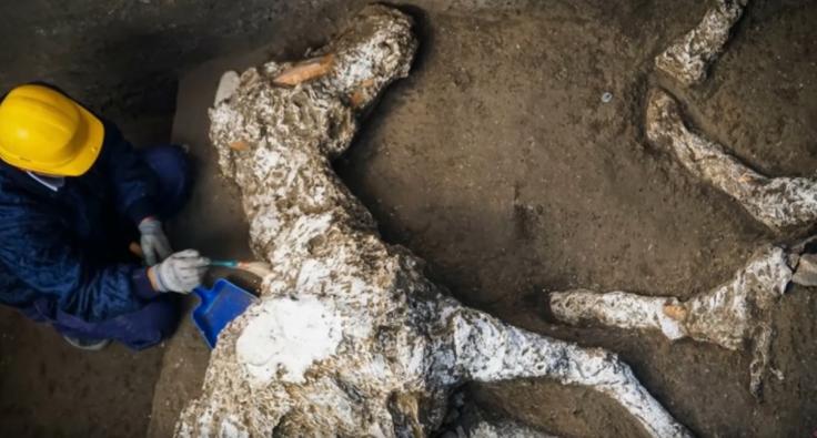 Pompeii discovery