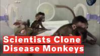 chinese-researchers-clone-five-gene-edited-disease-monkeys